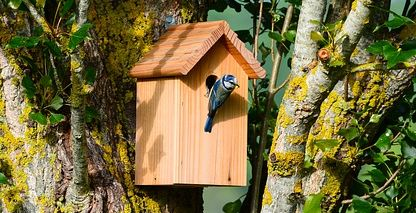 blue tit nesting box