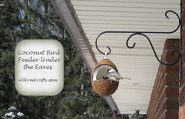 chickadee enjoying sunflower seeds from a coconut bird feeder