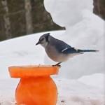 Ice Sculpture Bird Feeders