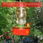 recycled nectar feeder with hummingbird feeding