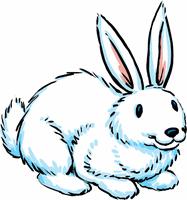 white bunny