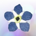 Forget-Me-Not Felt Flower Pin