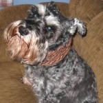 loom knitted dog cowl