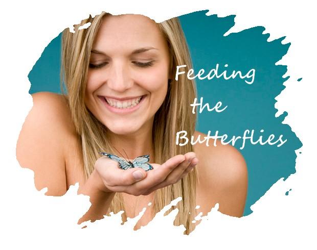 feed butterflies