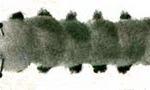 Pompom Caterpillar