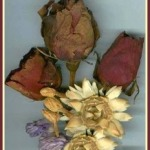 dried roses and straw flower