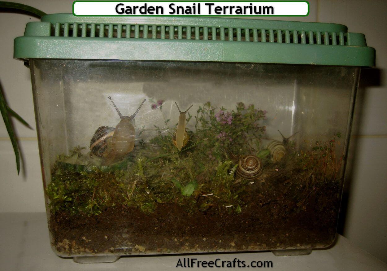 How To Keep Pet Garden Snails