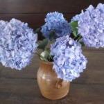 vase of hydrangeas