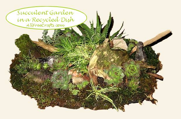 Recycled Dish Succulent Garden