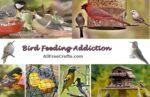 bird feeding addiction banner