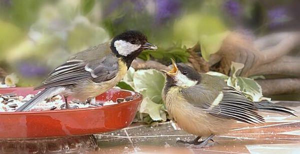 bird feeds baby seed