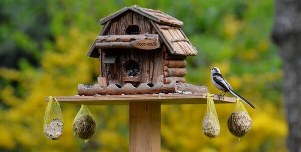 food house for birds