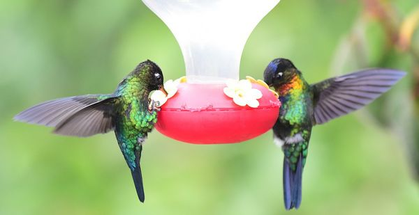 two hummingbirds on a red feeder