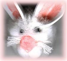 book bunny face