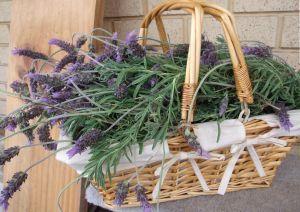 cut lavender in basket